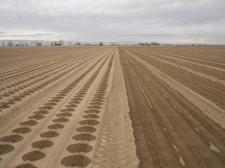 Driptips Tips For Successful Drip Irrigation From Toro